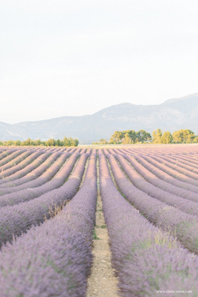 When and where to shoot lavender fields in France 1
