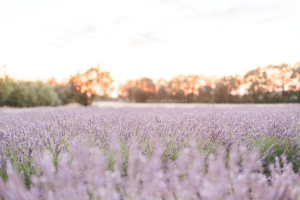 When and where to shoot lavender fields in France claire eyos130