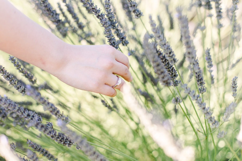 When and where to shoot lavender fields in France claire eyos150